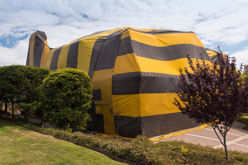 Brown and yellow striped tent covers a house for fumigation process